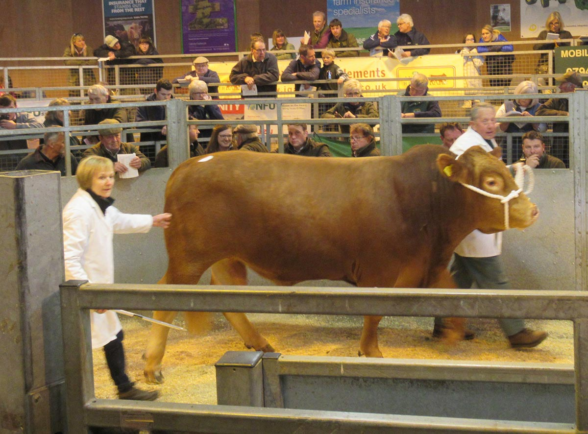 Top Price Bull: Welland Valley Dynamic 12