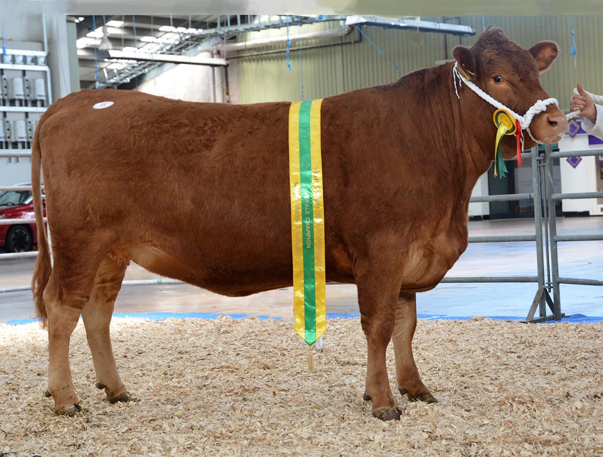 Female Champion - AI Z Woodhayes Daffodil 59 for 2200gns