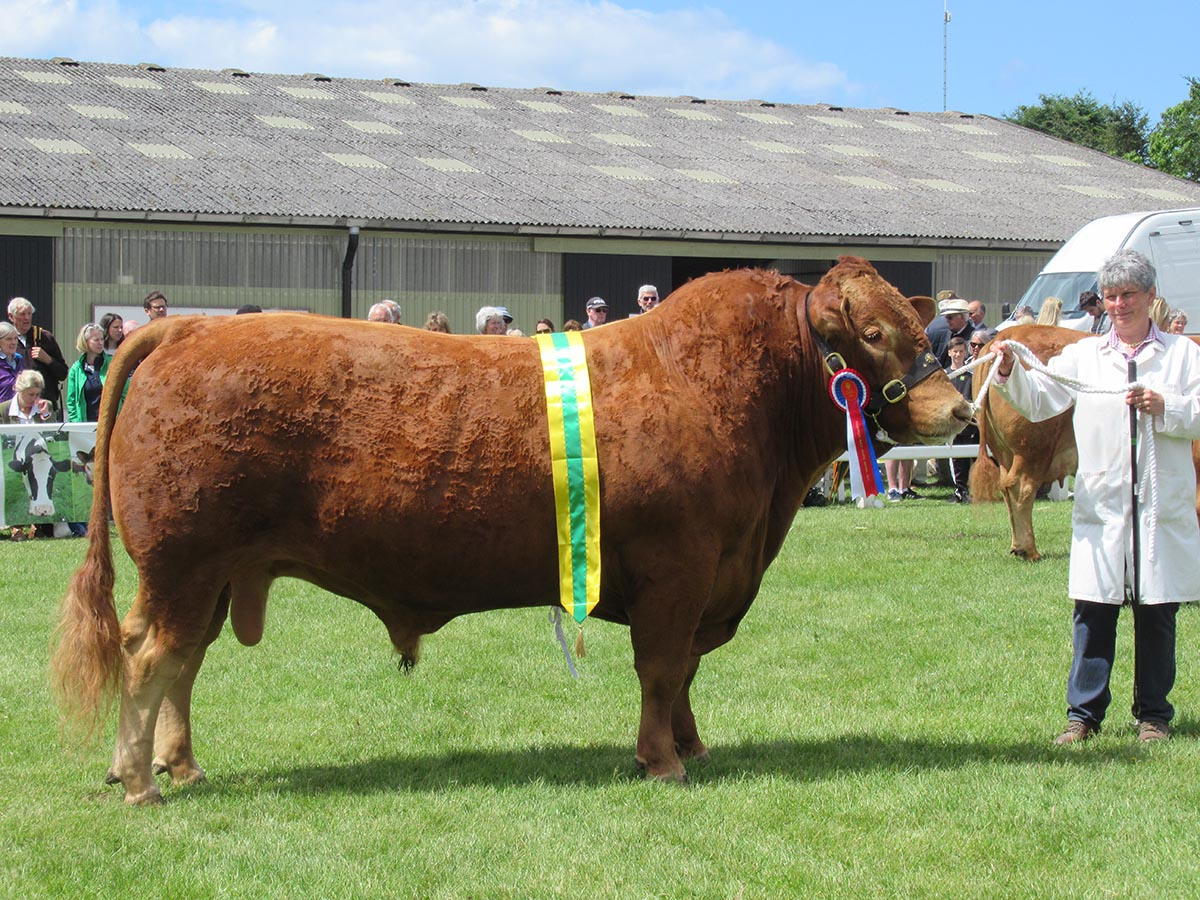Male & breed champion, Tregarrick Hamilton
